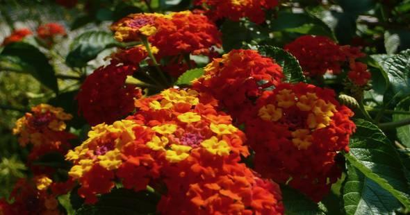 Image Le fleurissement d'Angers